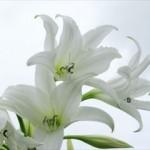 お彼岸にお供えする花の種類とギフト用の選び方