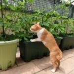 ベランダ菜園の虫除け(アブラムシなど)方法と対策について