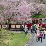 浜名湖花フェスタ2016の日程とガーデンパークなど会場の見どころ