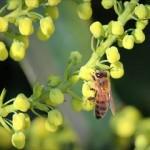 ミツバチに刺されたらどうなるの?子どもは特に注意が必要!