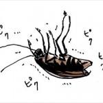 ゴキブリの生態と揃えておきたい駆除アイテムとは!?