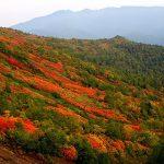 大雪山「黒岳」の紅葉時期と見頃をご紹介!