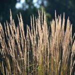 秋の七草をご存知ですか?気になる時期や簡単な覚え方を大公開!