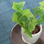 観葉植物に虫がわく理由!?その対策と駆除方法を大公開!