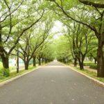 8月10日は「道の日」に制定された由来や各地で催されるイベント情報